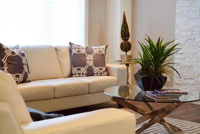 rostlina v obýváku