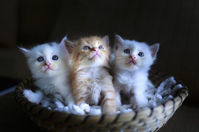 koťata v košíku